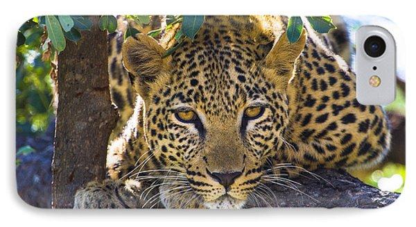 Leopard In Tree IPhone Case