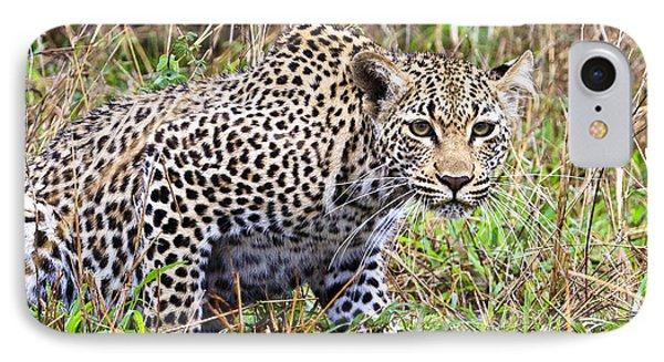 Leopard Stare IPhone Case