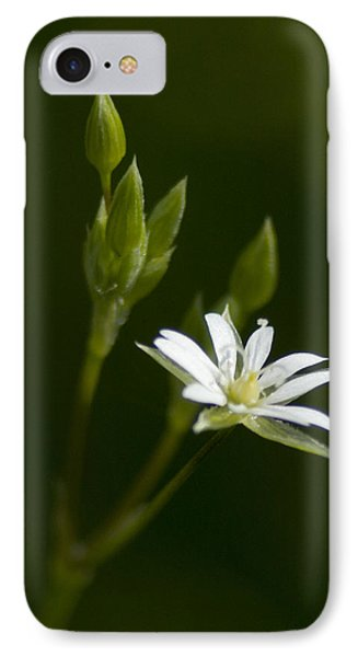 Lesser Stitchwort IPhone Case