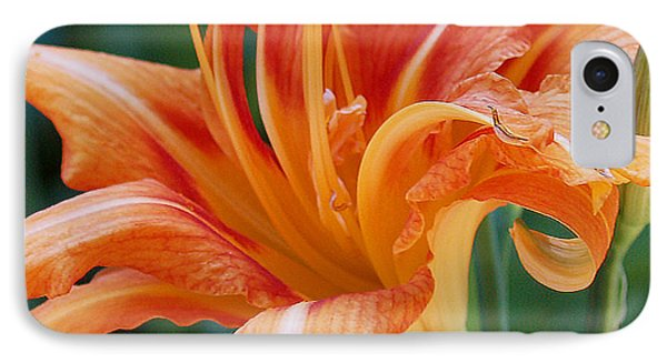 Lily In Orange2 IPhone Case