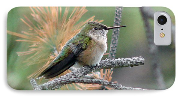 Little Hummer At Rest IPhone Case