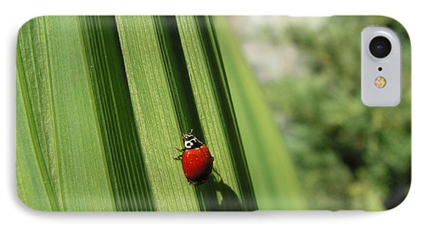 Ladybird IPhone Case