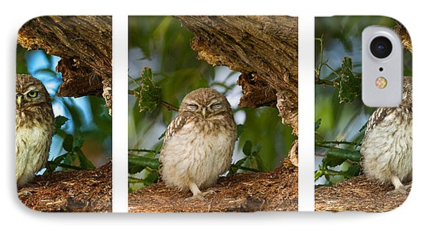 Little Owl Triptych IPhone Case