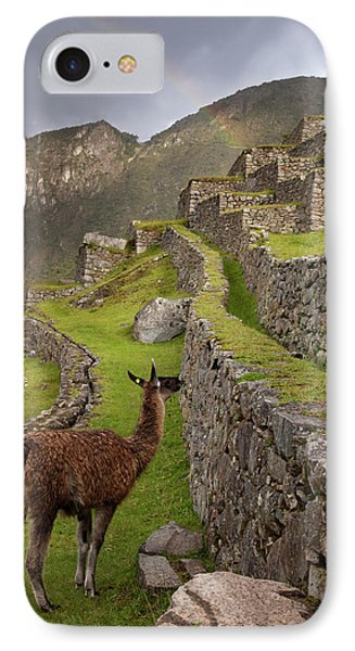 Llama Stands On Agricultural Terraces IPhone Case