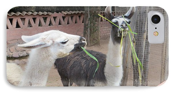 Llamas In Peru IPhone Case