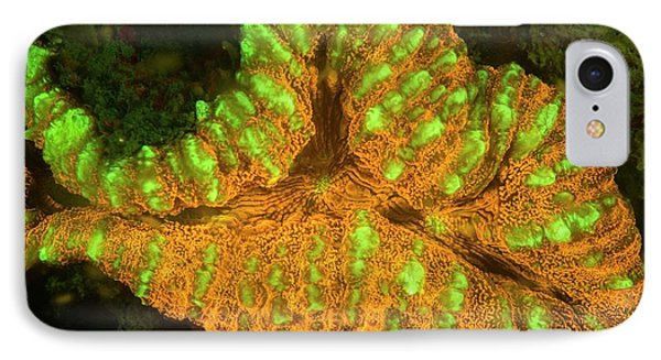 Fluorescence iPhone 8 Case - Lobophyllia Coral Fluorescing by Louise Murray