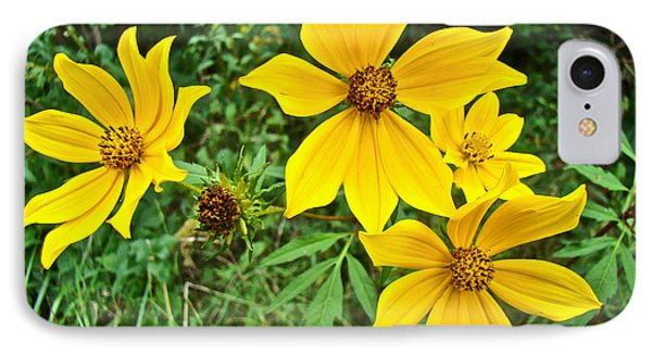 Long-bracted Tickseed Sunflower Wildflower - Bidens Polylepis IPhone Case