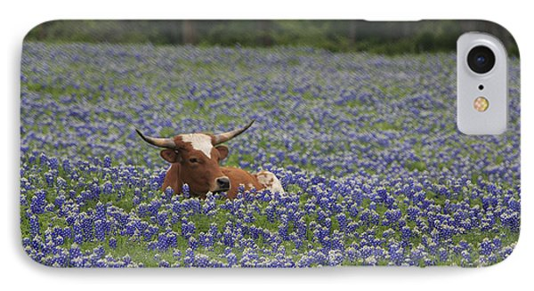Longhorn In Bluebonnets IPhone Case