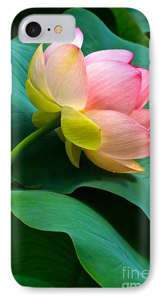 Lotus Blossom And Leaves IPhone Case