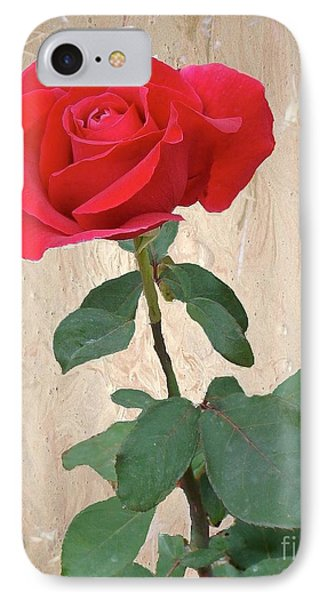 Love Is Like A Red Red Rose IPhone Case