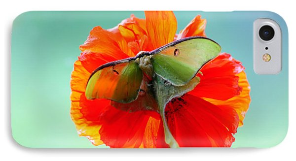 Luna Moth On Poppy Aqua Back Ground IPhone Case