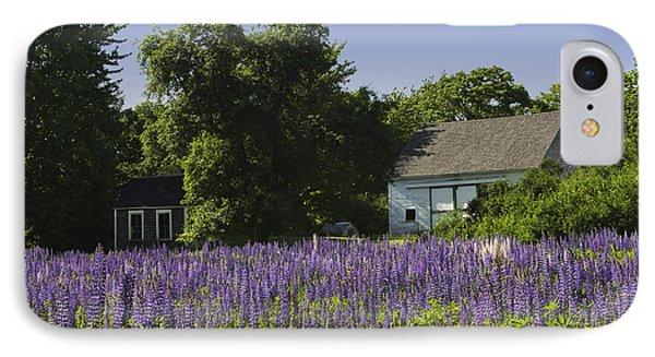 Lupine Flowers Near Round Pond Maine IPhone Case