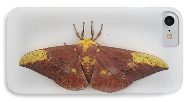 Magnificent Moth IPhone Case