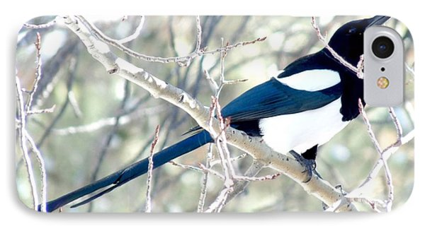 Magpie On Aspen Tree IPhone Case