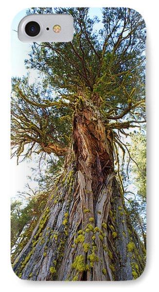 Majestic Sequoia From The Bottom Up IPhone Case