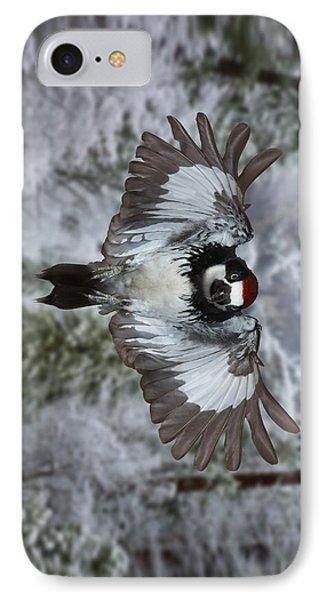 Male Acorn Woodpecker - Phone Case Design IPhone Case