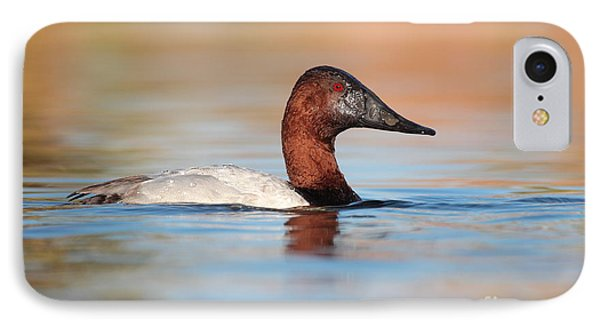 Male Canvasback IPhone Case