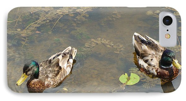 Male Mallards IPhone Case