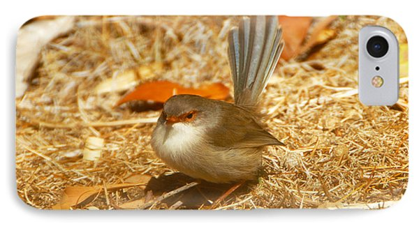 Male Wren IPhone Case