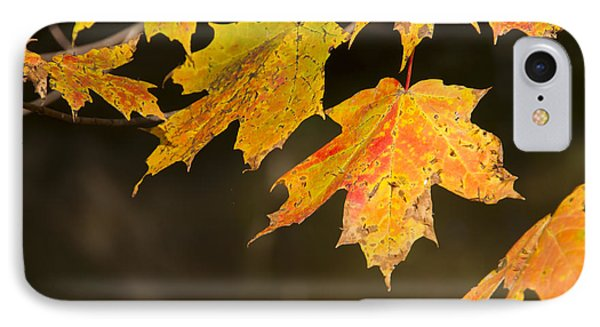 Maple Leaves In Autumn IPhone Case