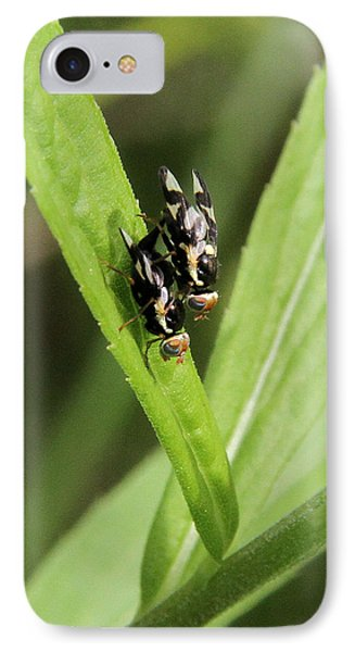 Mating Fruit Flies IPhone Case