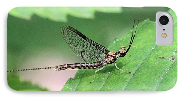 Mayfly IPhone Case