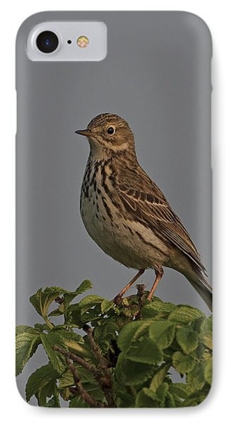 Meadow Pipit IPhone Case