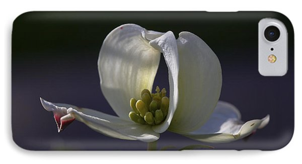 Memory - A Dogwood Blossom IPhone Case