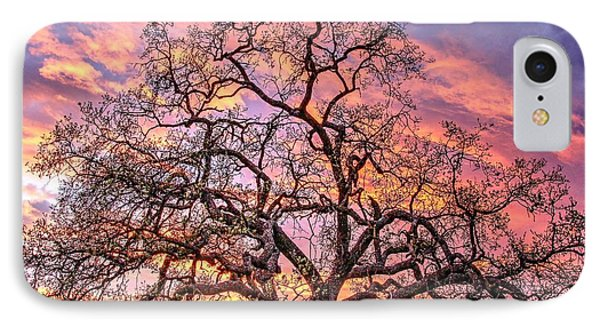 Mighty Oak Tree At Sunset IPhone Case