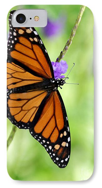 Monarch Butterfly In Spring IPhone Case