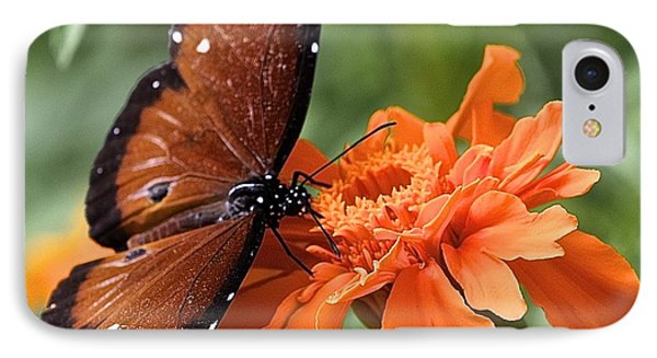 Monarch Butterfly On Marigold IPhone Case