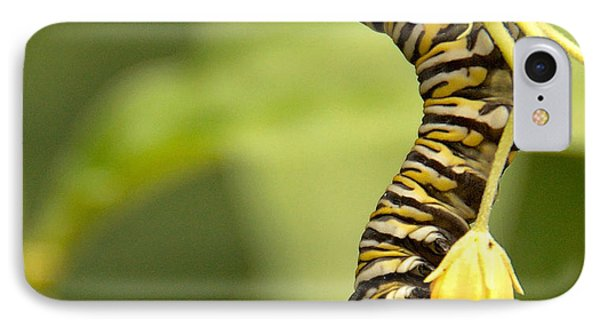 Monarch Caterpillar IPhone Case