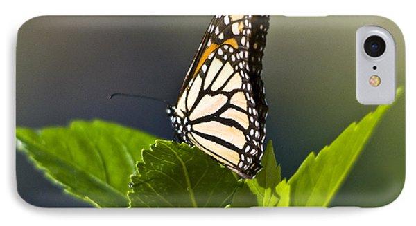 Monark Butterfly No. 2 IPhone Case