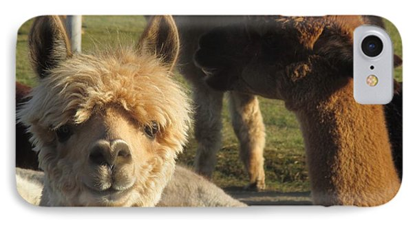 Moonacre Alpacas 2 IPhone Case