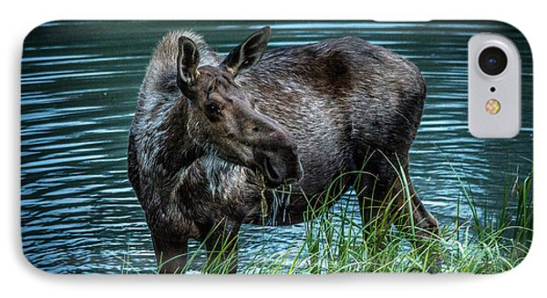 Moose In The Water IPhone Case