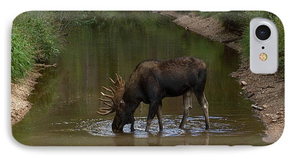 Moose Sipping Water IPhone Case