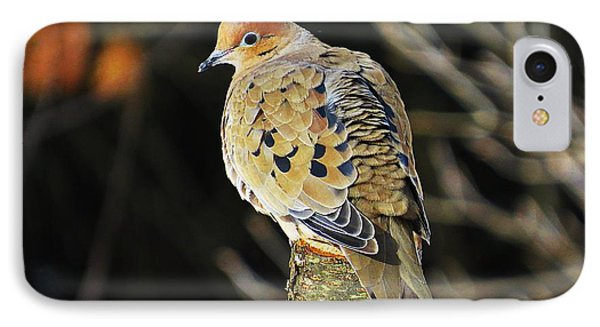 Mourning Dove On Post IPhone Case