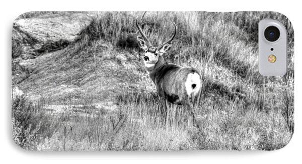 Mule Buck B/w IPhone Case