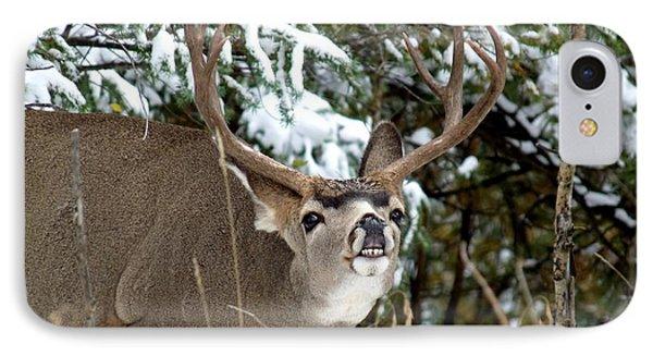 Mule Deer - Flehmen Response IPhone Case