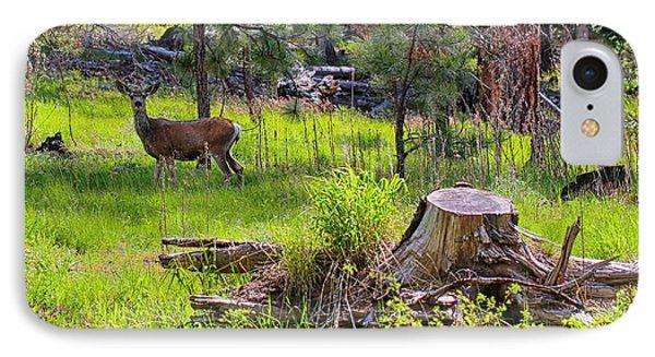 Mule Deer In Oregon IPhone Case