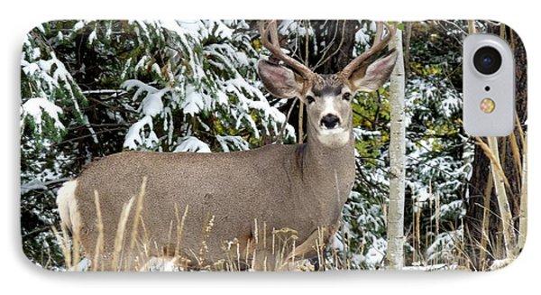 Mule Deer In The Snow IPhone Case