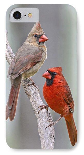 My Cardinal Neighbors IPhone Case