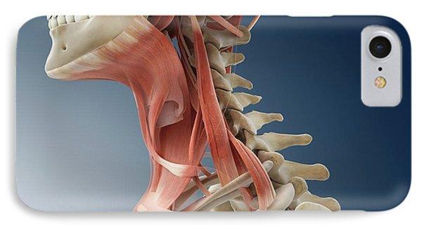 Platysma Muscle iPhone 8 Cases | Fine Art America