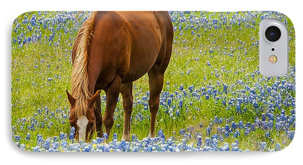 Nelly Grazing Among The Bluebonnets IPhone Case