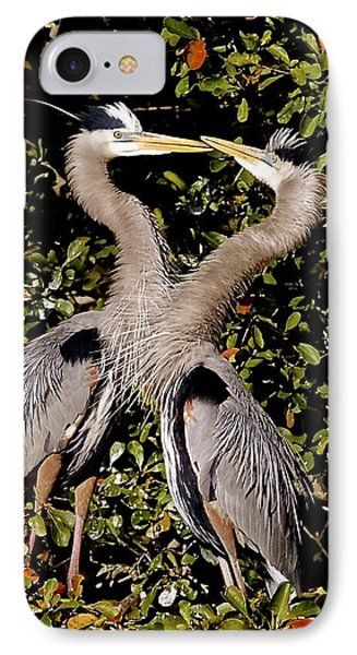 Nesting Great Blue Herons IPhone Case