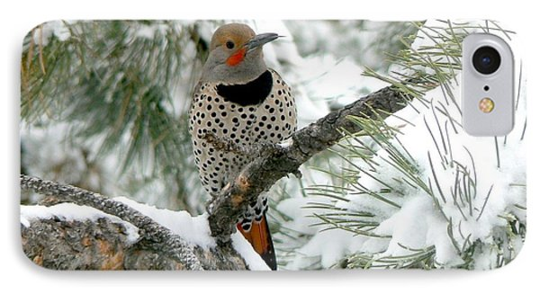 Northern Flicker On Snowy Pine IPhone Case