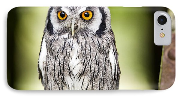 Northern White Faced Owl IPhone Case