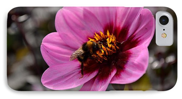 Nosy Bumble Bee IPhone Case