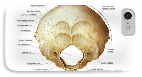 Occipital Bone Iphone 8 Cases Fine Art America