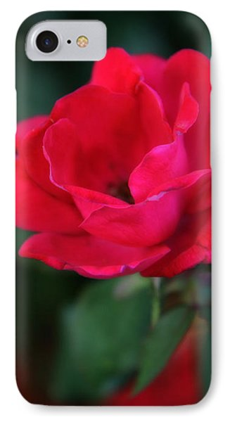 Old Fashioned Rose IPhone Case